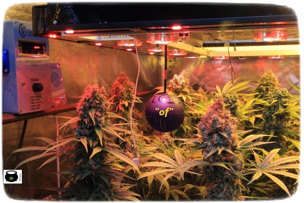 cultivo de marihuana interior semillas regulares hortitec toni13 7