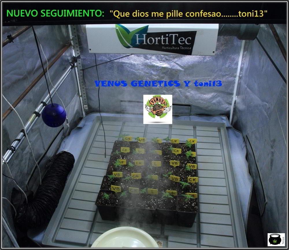 Nuevo seguimiento de Toni13: De 4 en 4 con semillas de Venus Genetics 1