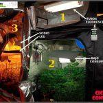 Ciclo continuo en cultivos de marihuana de interior
