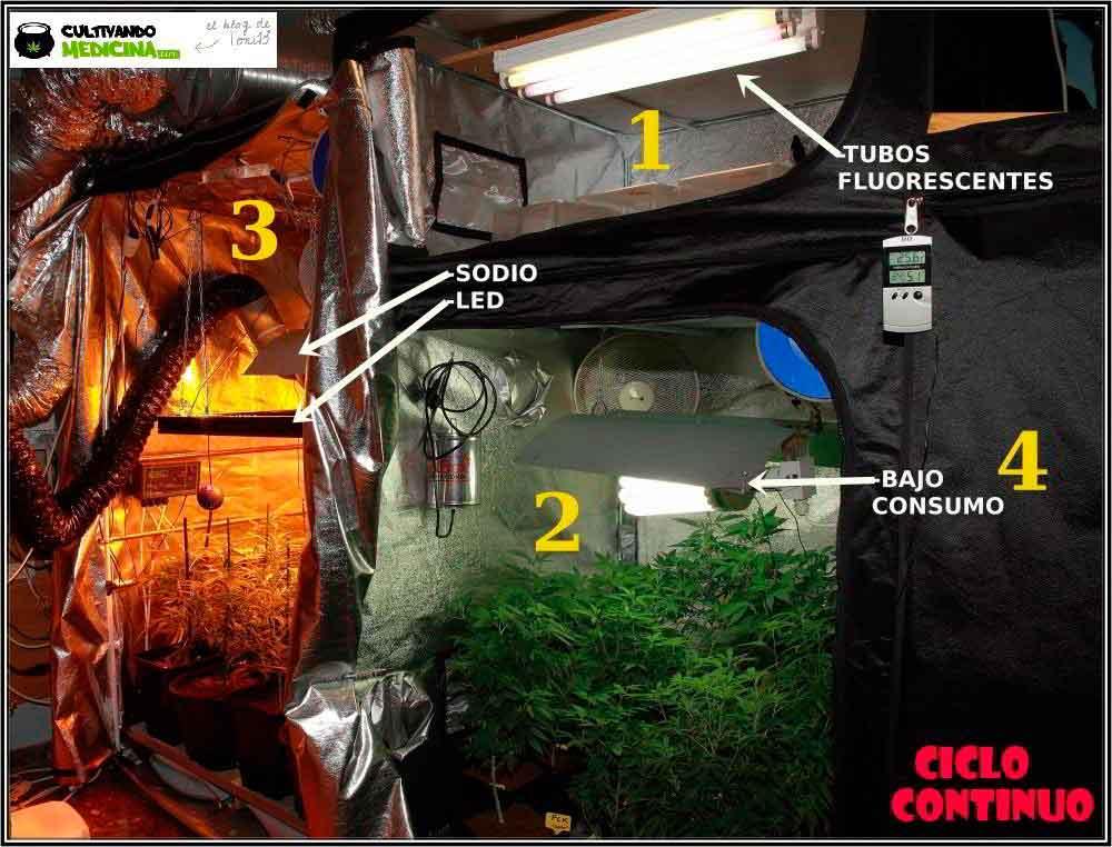 armario de cultivo de marihuana seguimiento toni13