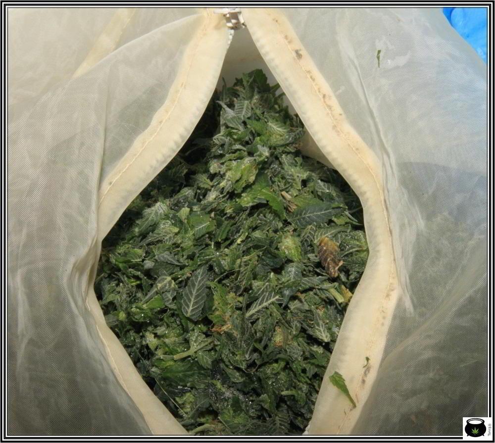 Restos de la manicura para hacer resina o ice o lator de marihuana