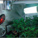 Ventilador de pinza Cyclone oscilante para cultivos de marihuana indoor