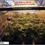 11.1-  27 días a 12/12: Las plantas han colonizado la superficie del armario