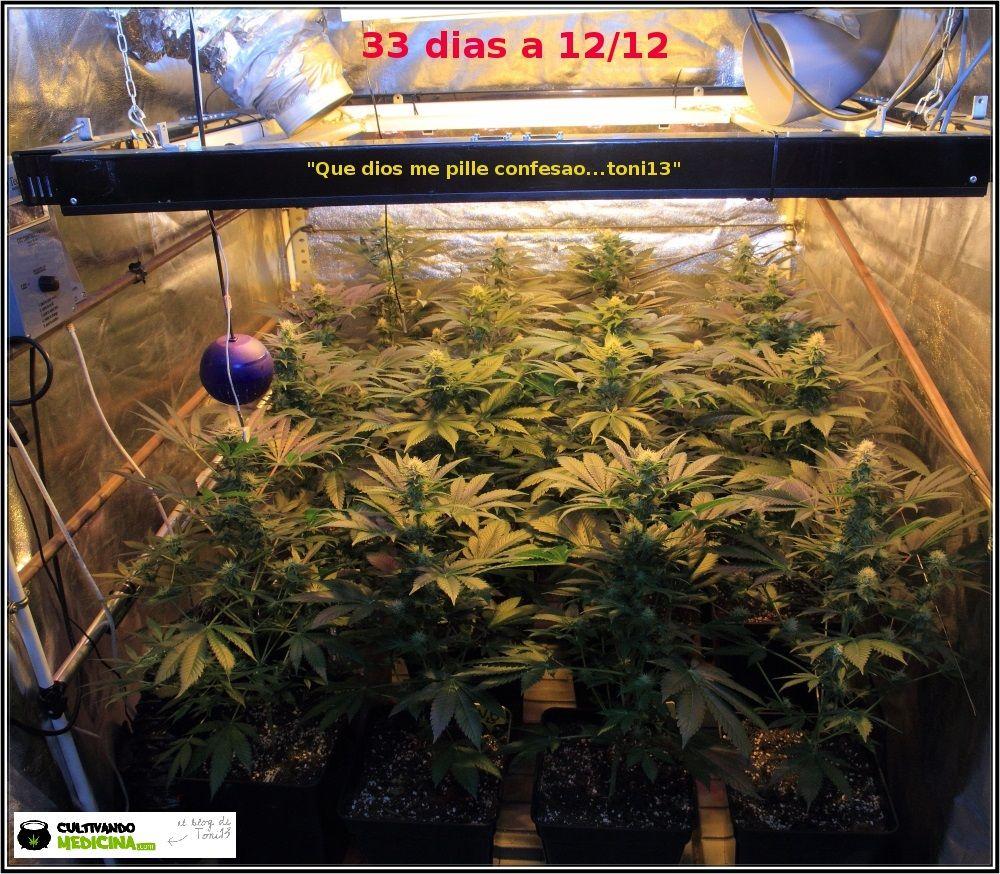 11.1- 27 días a 12/12: Las plantas han colonizado la superficie del armario 1