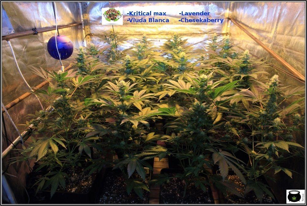 11.1- 27 días a 12/12: Las plantas han colonizado la superficie del armario 2