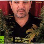 Según la justicia canadiense los pacientes pueden continuar cultivando su propio cannabis