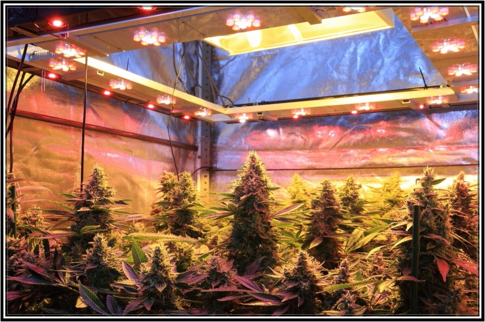 cultivo de marihuana indoor sodio y led