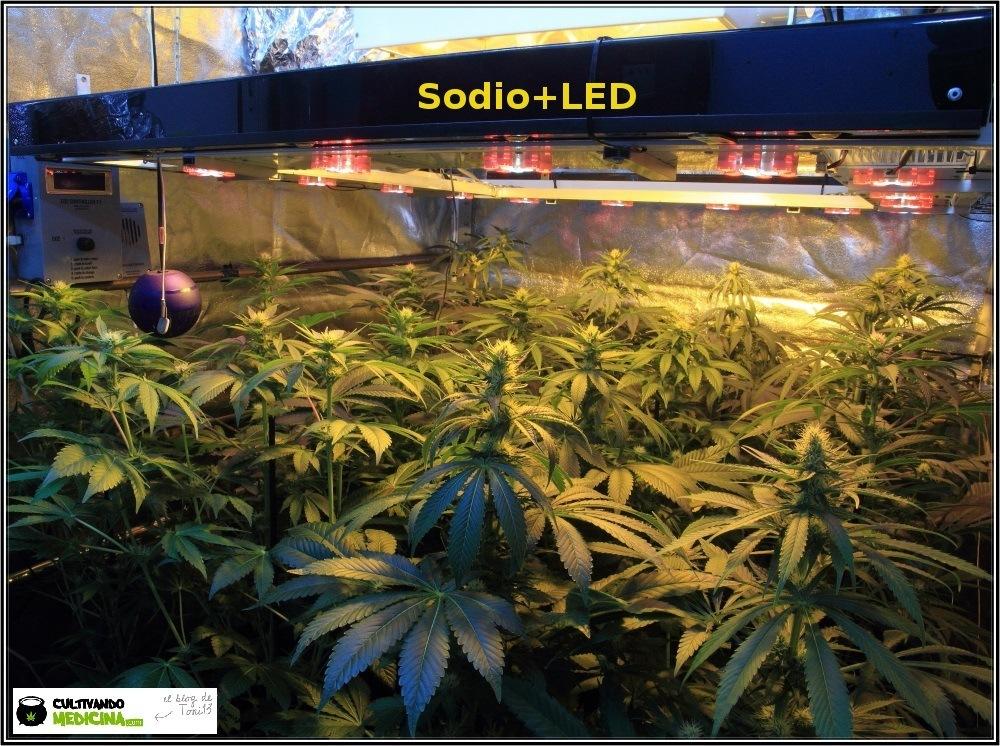 sodio+led-cultivo-marihuana