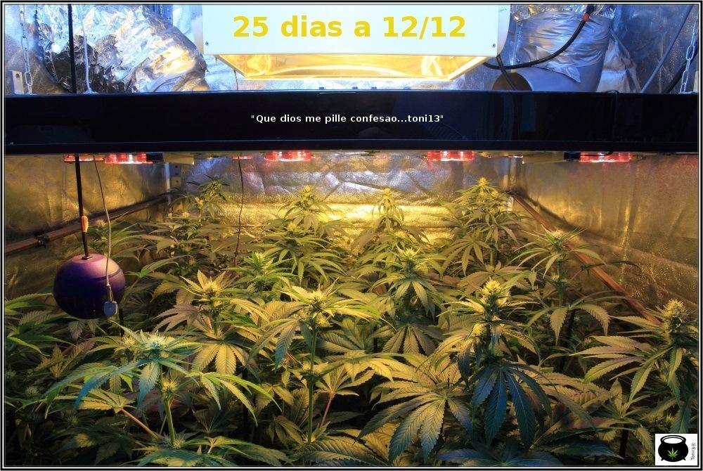 sodio+led-cultivo-marihuana-2