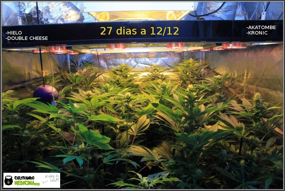 indoor-cultivo-marihuana