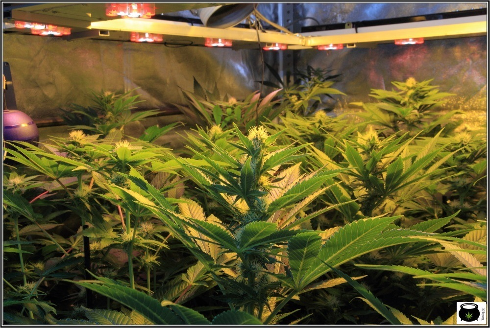 detalle-armario-cultivo-marihuana