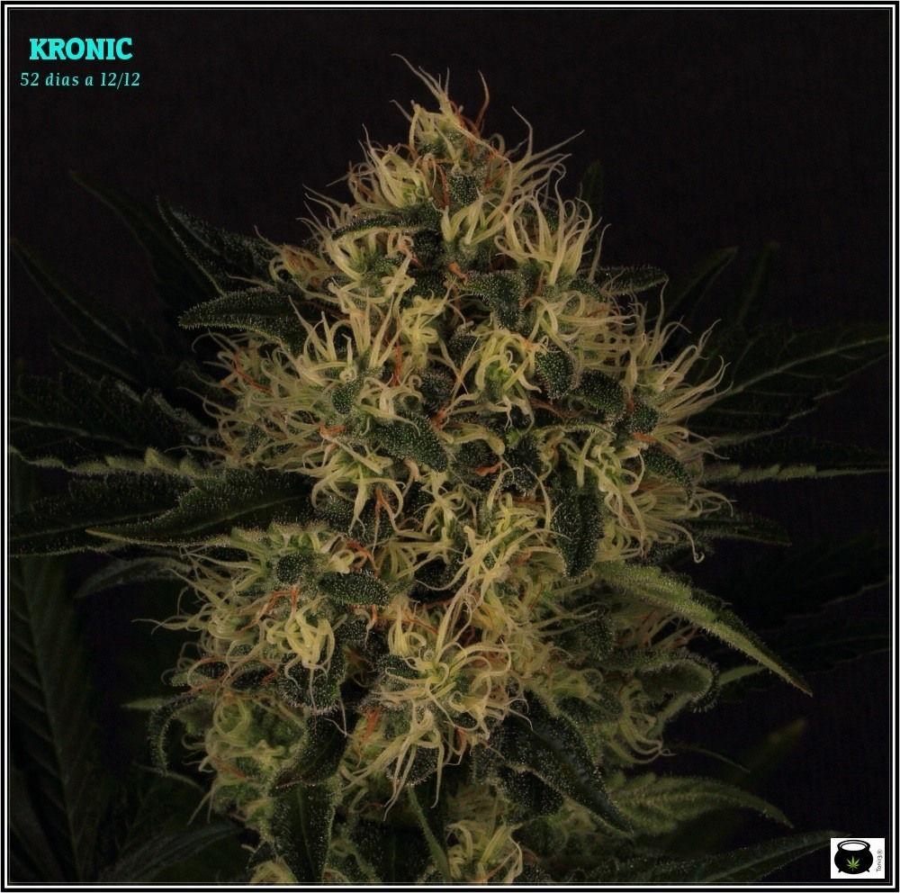 Kronic32