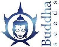 Buddha-seeds-semillas-marihuana