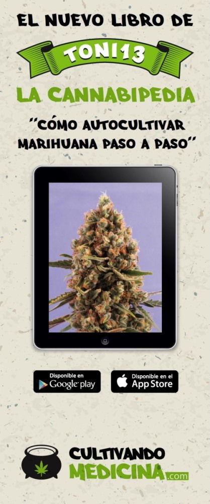 Cannabipedia-como-autocultivar-marihuana
