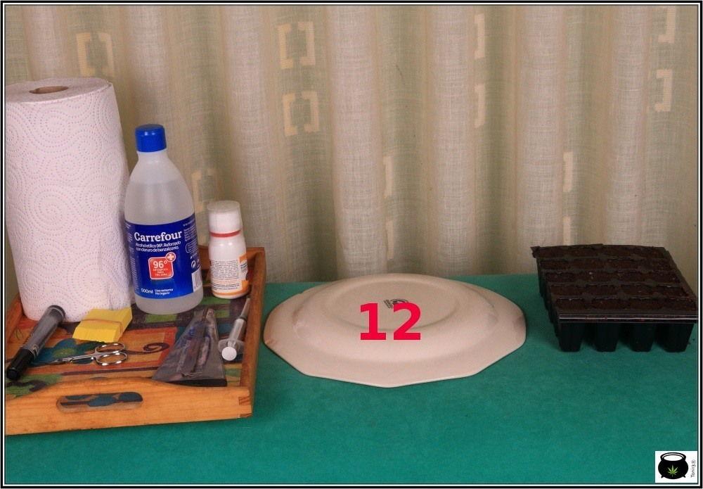 iclone-semillero-esquejes-marihuana-4