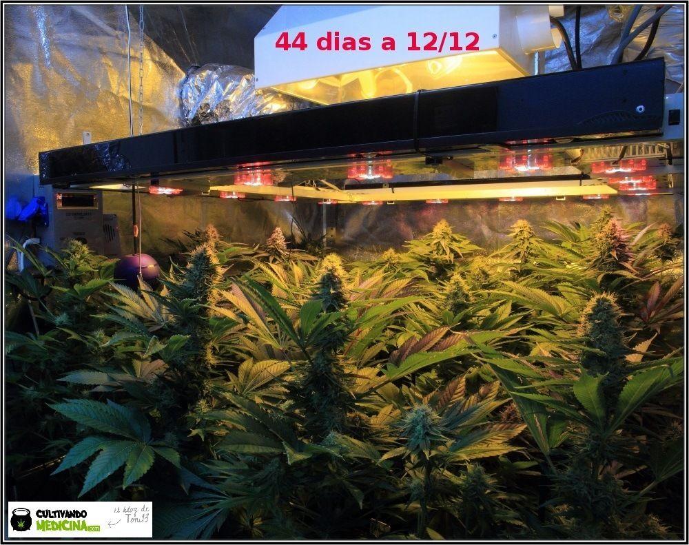 cultivo sodio+led-1