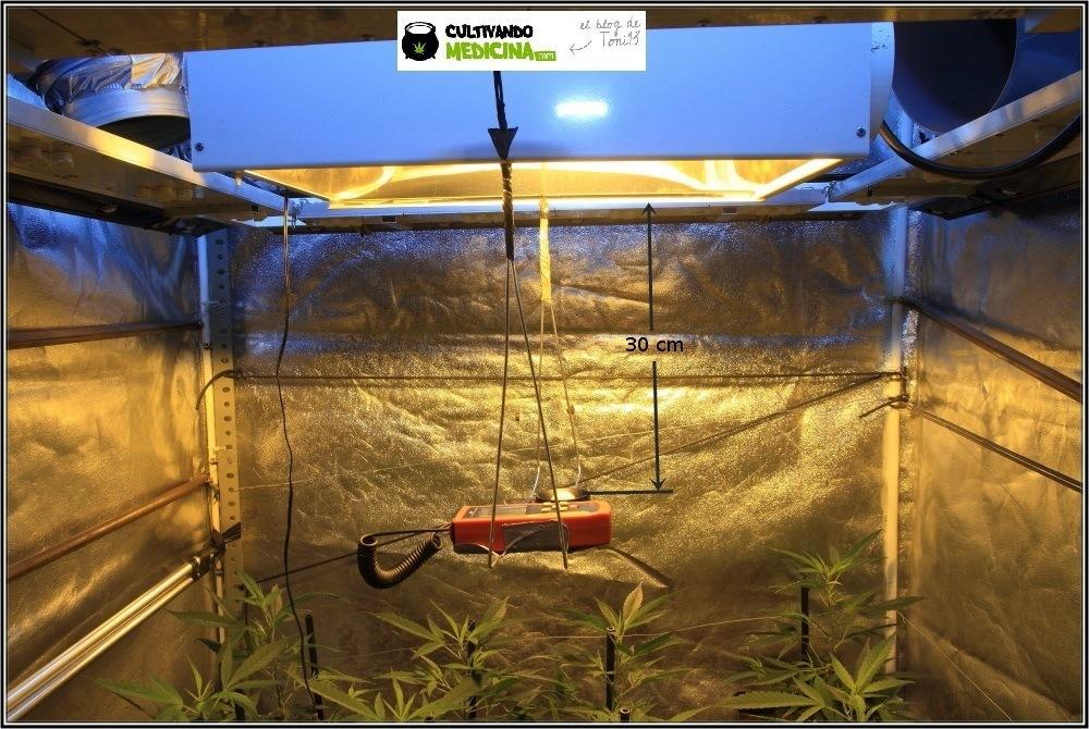Cultivo de marihuana coco y choco: comienza Floración prueba luxometro