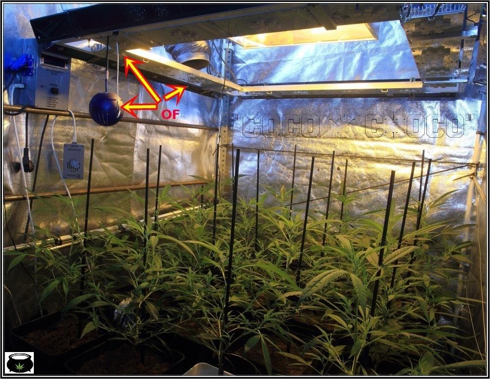 Cultivo-de-marihuana-co2-apagado