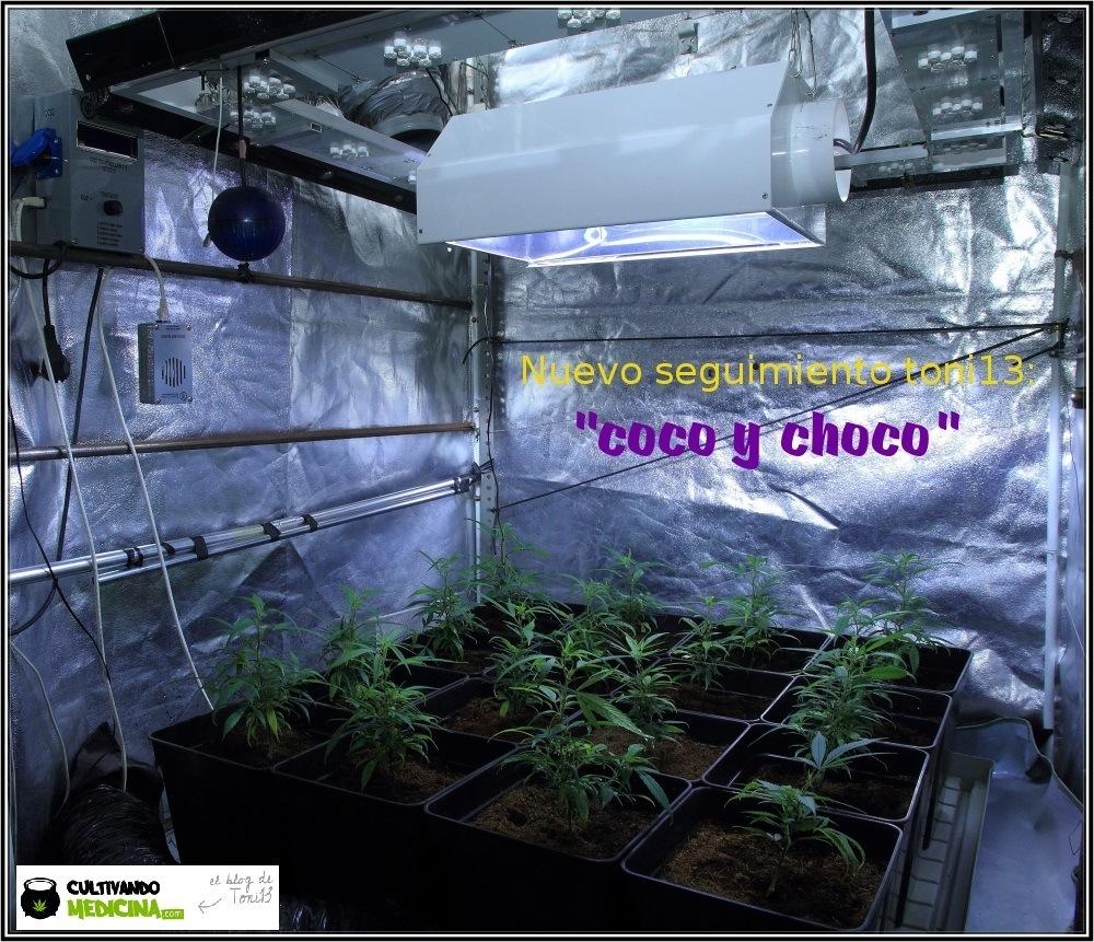 seguimiento-marihuana-coco-choco-fase-crecimiento-2