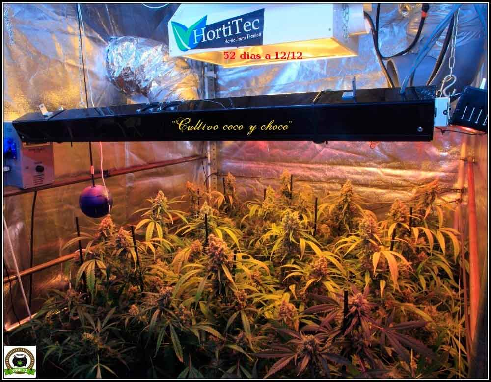 armario-marihuana-interior-coco-choco-chocolope