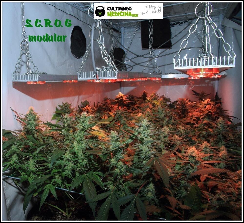 mini-scrog-modular-led-marihuana-1