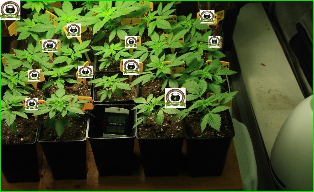 9 Crecimiento vegetativo días 21-22-23-24 y 25-1