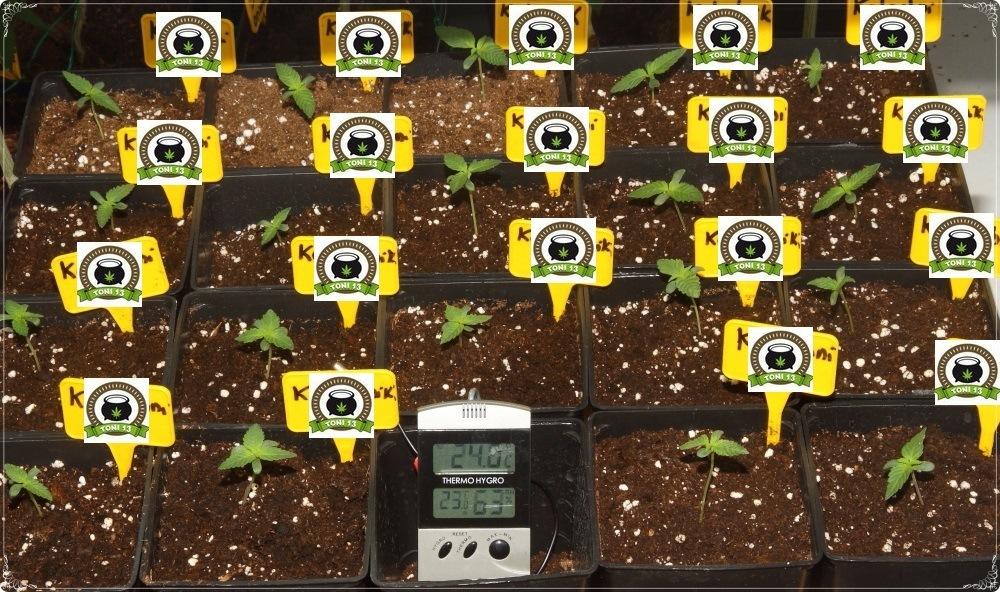 Prevención en cultivos de marihuana de interior