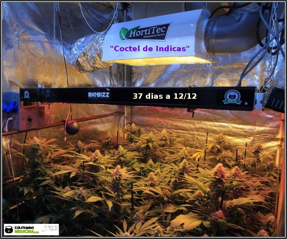 11- Floración: 5 semanas y 2 días. Ensayo con luz residual y riego 1