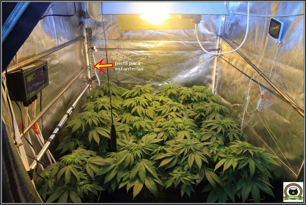 C mo colocar y utilizar un ventilador grande en cultivos de marihuana - Armario cultivo interior 120x120x200 ...