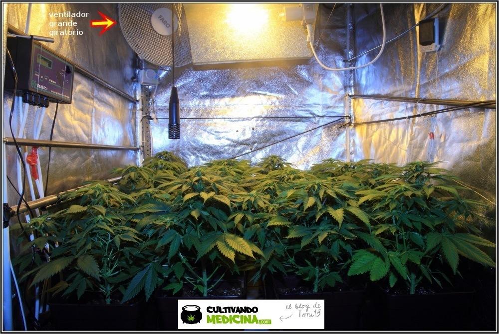 Ventilador giratorio instalado en armario de cultivo de interior de marihuana
