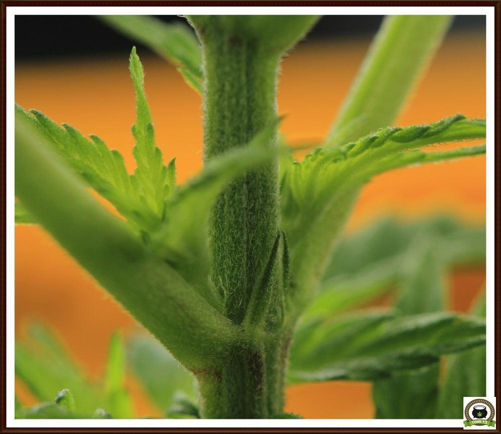 13- Crecimiento vegetativo: 27 días a 12/12-2