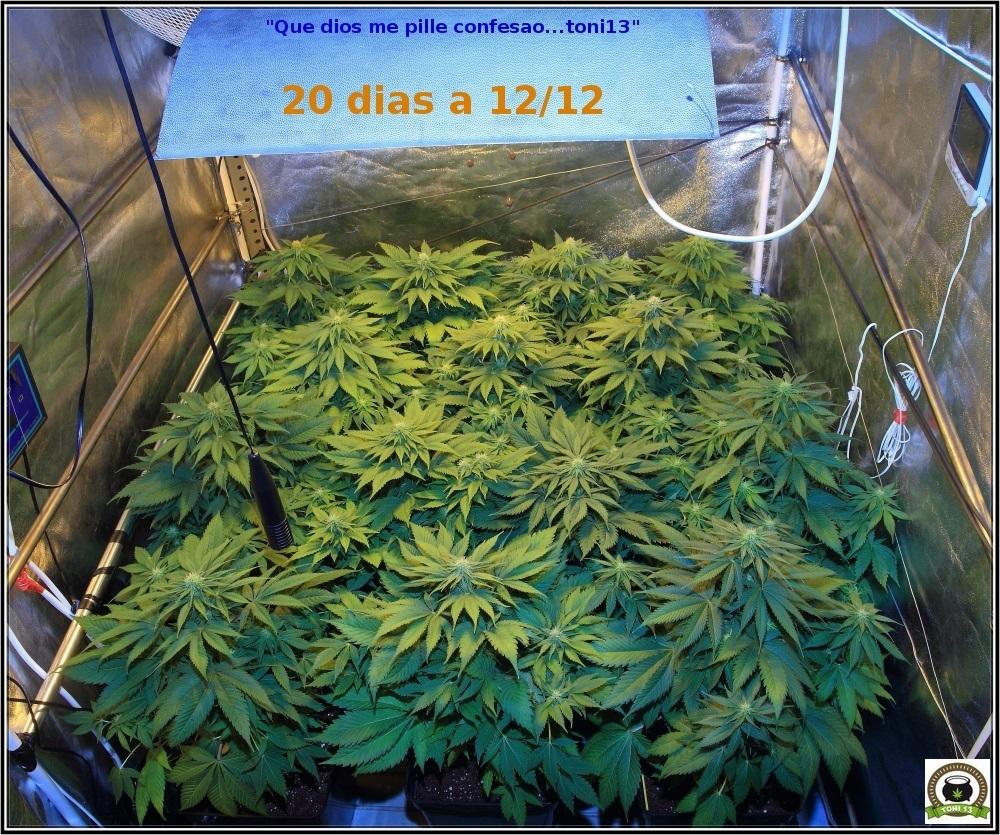 cultivotoni131118