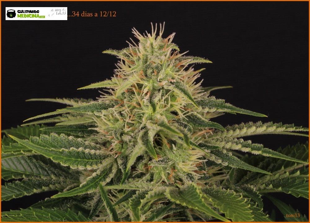 cultivotoni131135