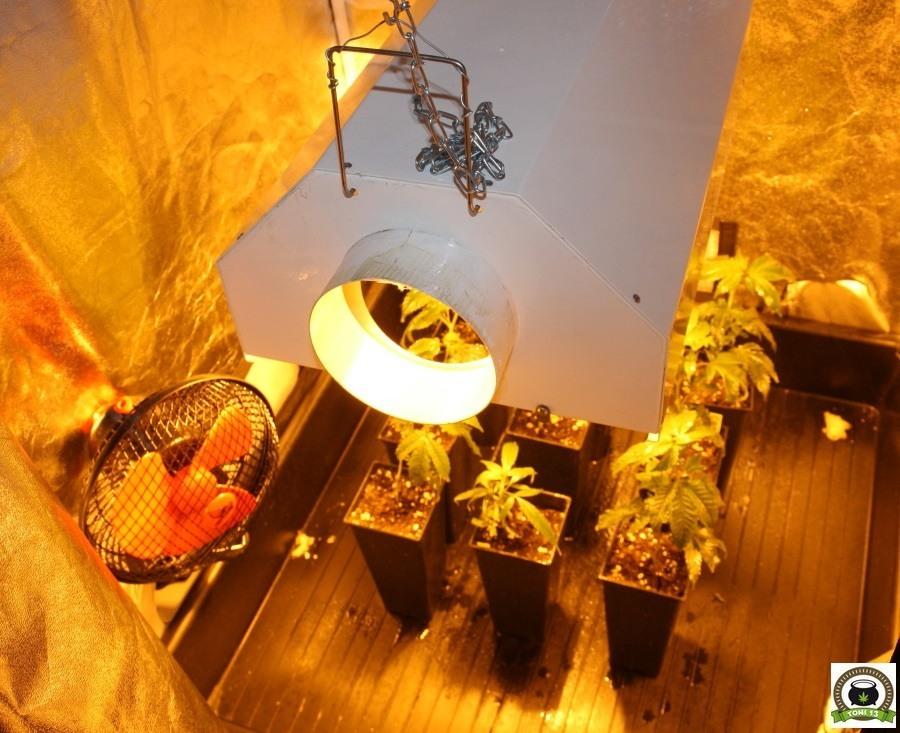 Cultivo de marihuana armario interior pequeño sodio 250W