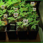 9- Crecimiento vegetativo: días del 21 al 25