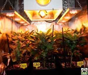 armario de marihuana pequeño 250W sodio y LED