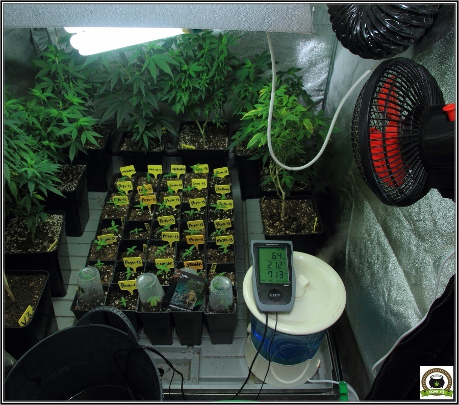 Prevención en cultivo marihuana-3