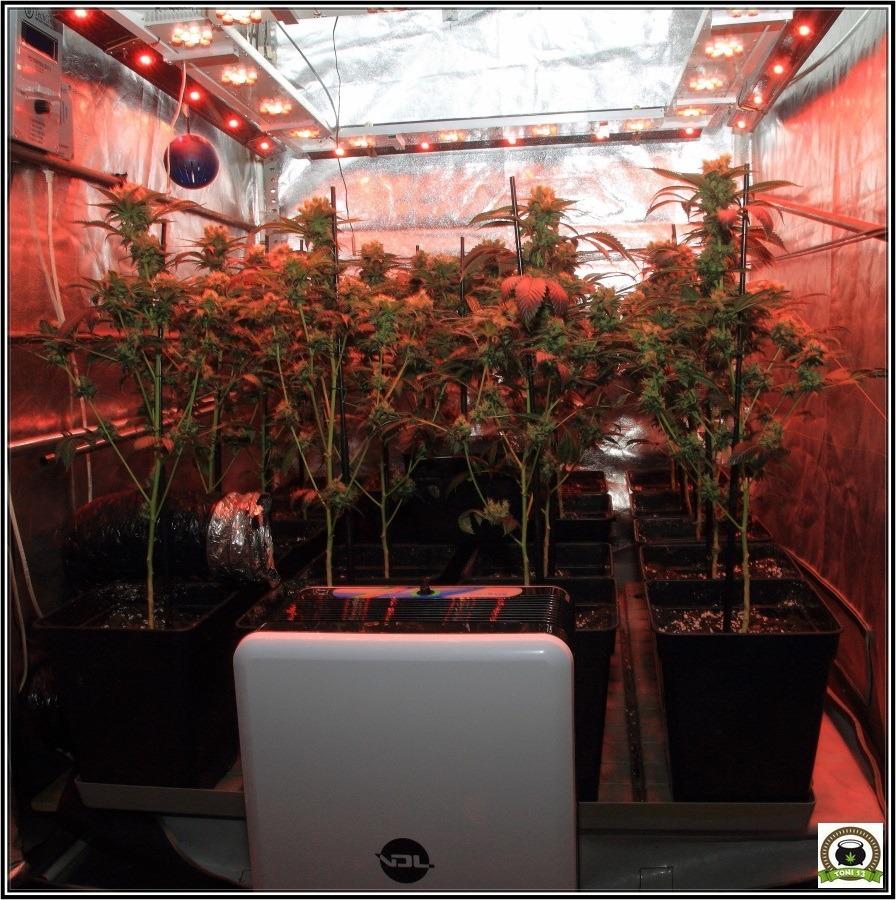 Deshumidificador en el interior de un armario de marihuana