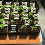 8- Crecimiento vegetativo, ahora si que chuta