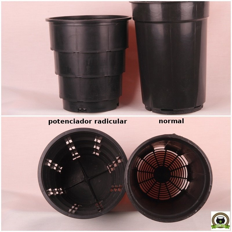 maceta potenciadora radicular comparación contenedor normal