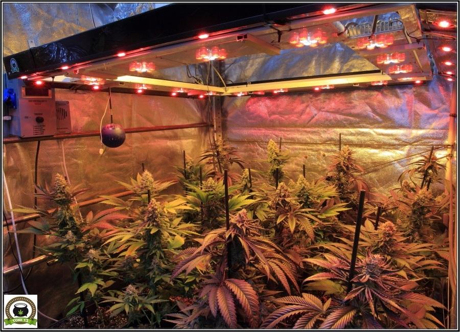 11-Lavado de raíces y luz residual-2