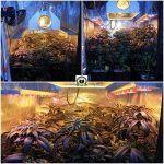 Peyo-XIII Stars El despertar de la Huerta VII Corte y cosecha de las tropas imperiales