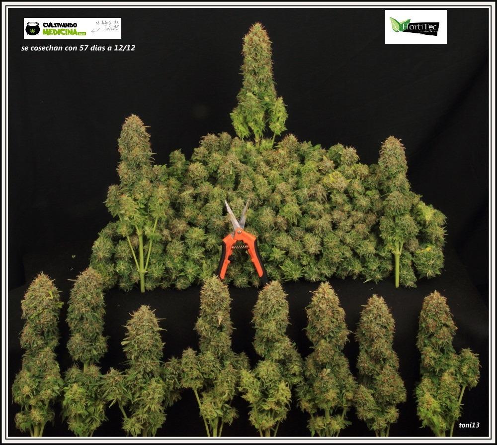 Tijera para manicurar marihuana Bud Clean