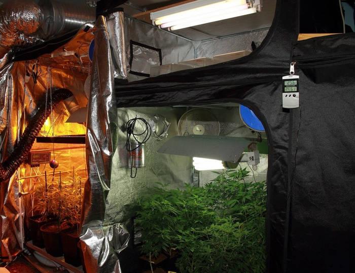 cómo-plantar-marihuana-armario-interior