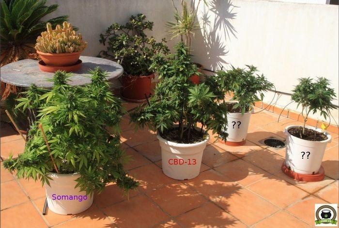 seguimiento-marihuana-exterior