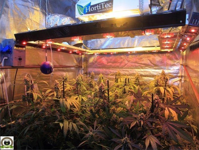 seguimiento-marihuana-coco-choco