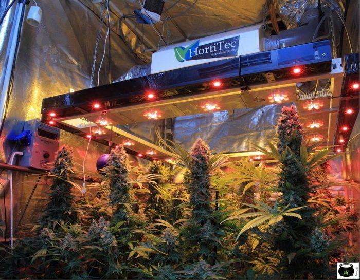 seguimiento-marihuana-en-busca-tesoro