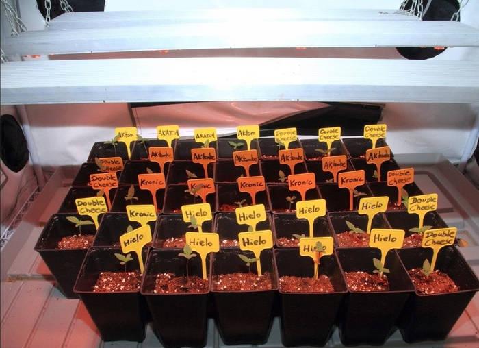 plantar-semilla-eficiente