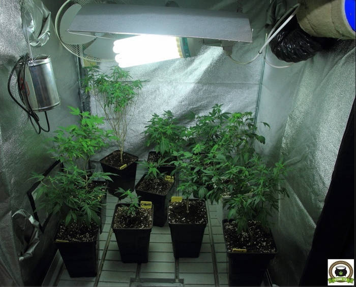 plantas-madre