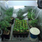 6- Día 26 a 32: Nos cambiamos de casa al armario de interior floración